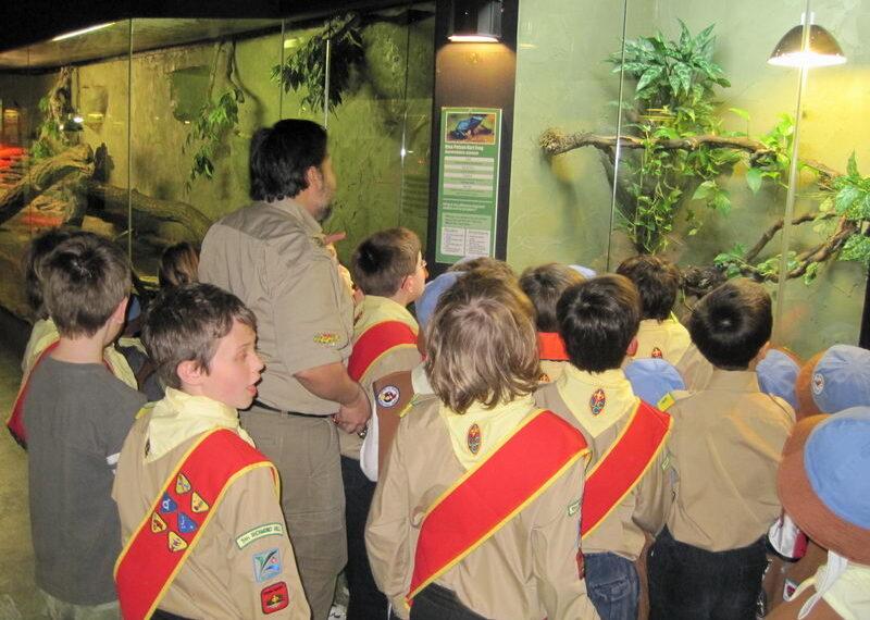 reptilia scouts on zoo tour