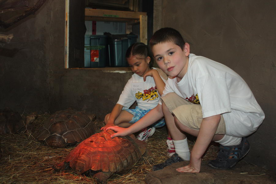 junior keepers learning to care for tortoise during program