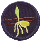 reptilia scouts and guides ecology badge
