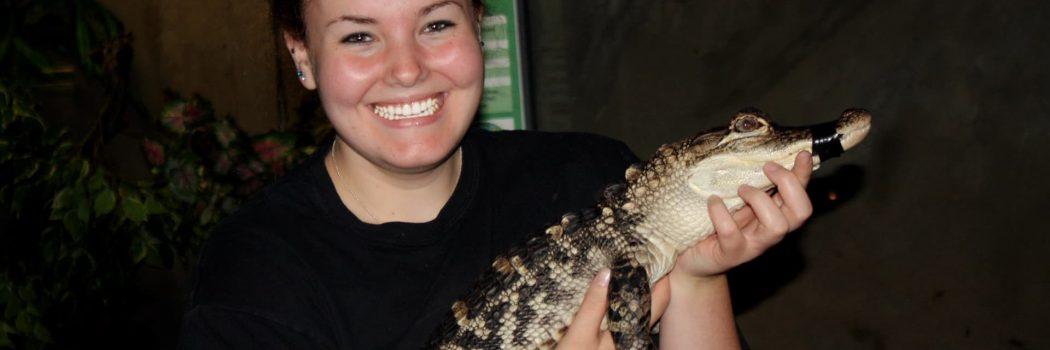 Reptilia Intern holding baby alligator