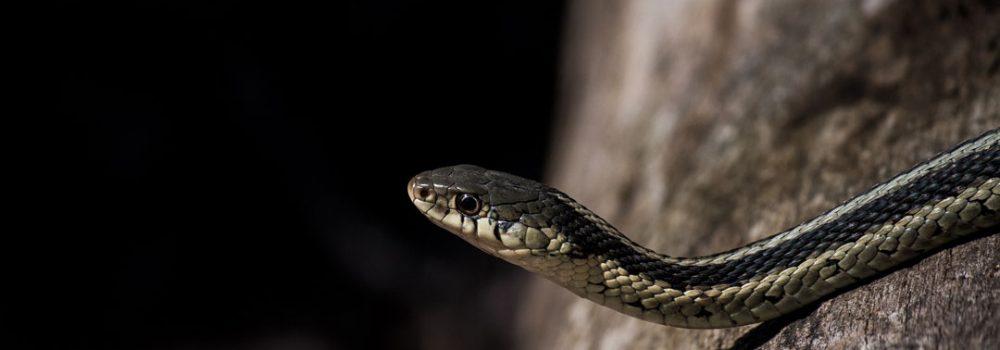 reptilia reptile zoo garter snake