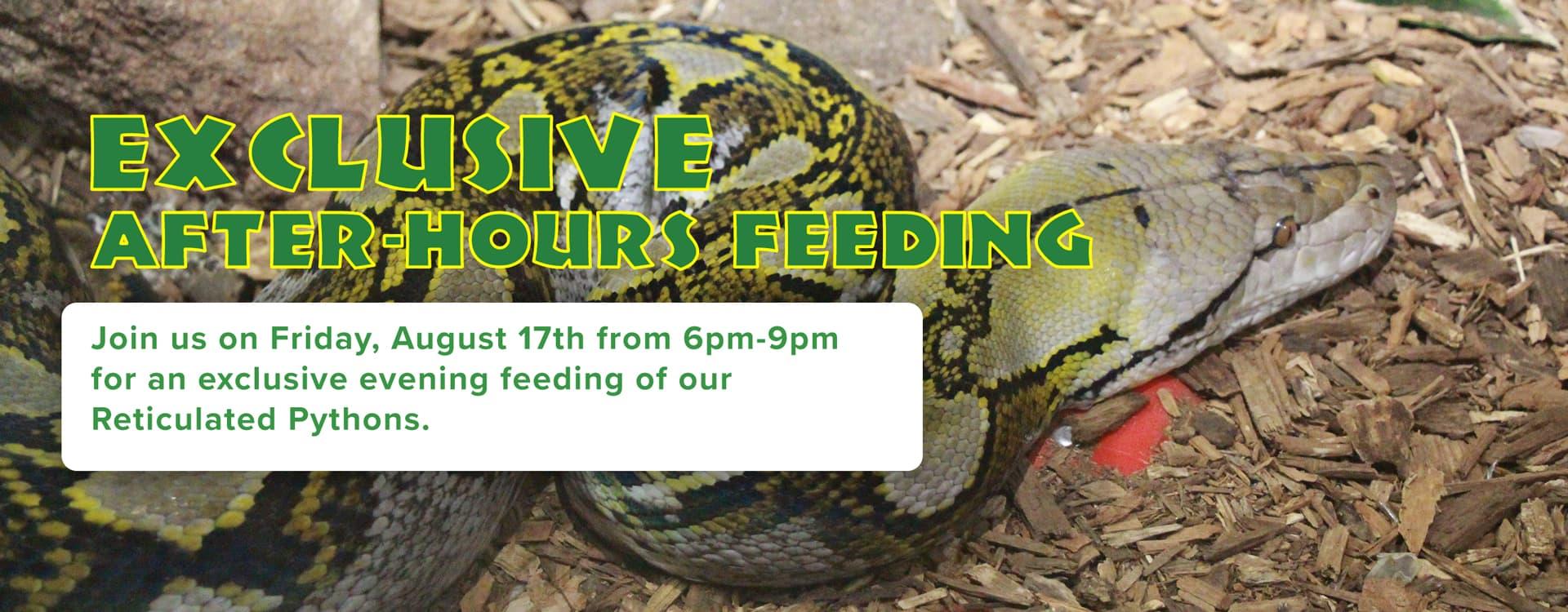 Reptilia Python Feeding