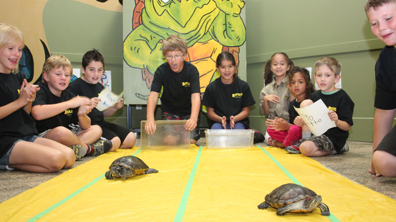 RECF Campers racing turtles at Reptilia Camp