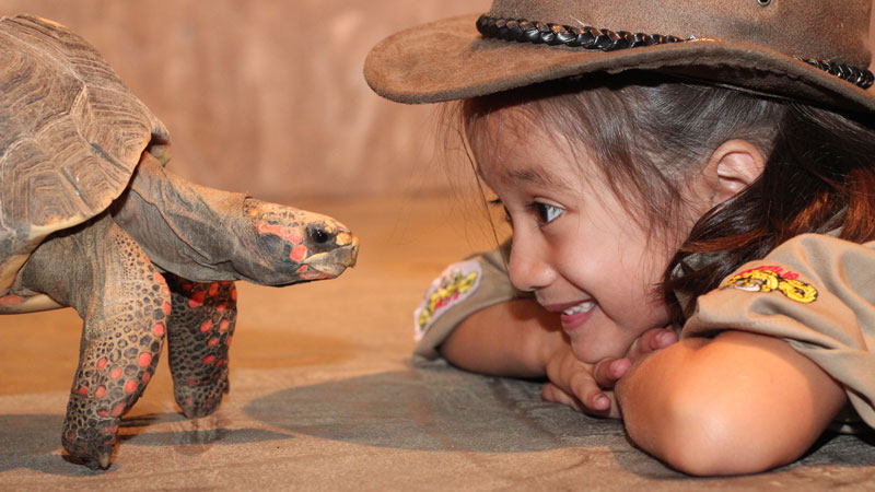 RECF Sponsor girl playing with tortoise