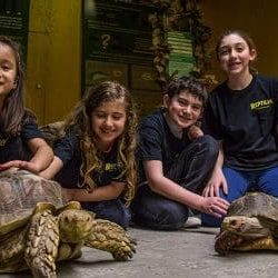 Reptilia Animal Camps for Kids in the GTA