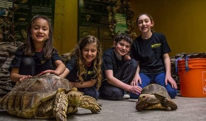 Reptilia Camps with Children and Tortoises