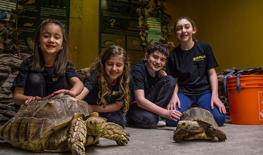 Reptiliz Zoo Camps with Children and Tortoises