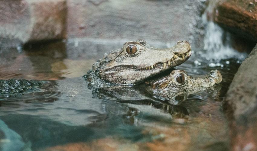 Reptilia Zoo Reptile Kingdom featuring the World of Reptiles