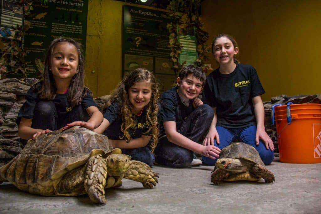 Reptilia Camp Guests sitting with Tortoises